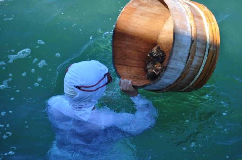 Prise du jour à plusieurs mètres de profondeur pour les pêcheuses d'Ise-Shima