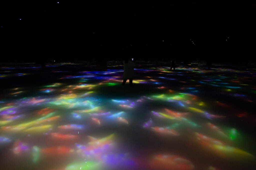 carpes digitales qui nagent dans le bassin d'une exposition de teamLab Planets à Tokyo