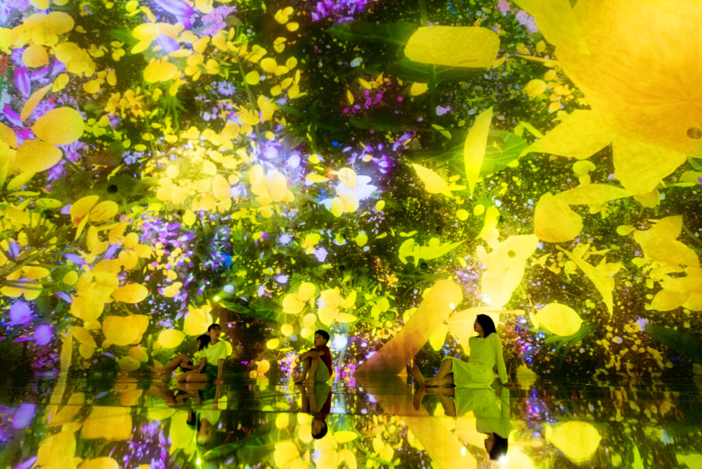 fleurs digitales jaunes