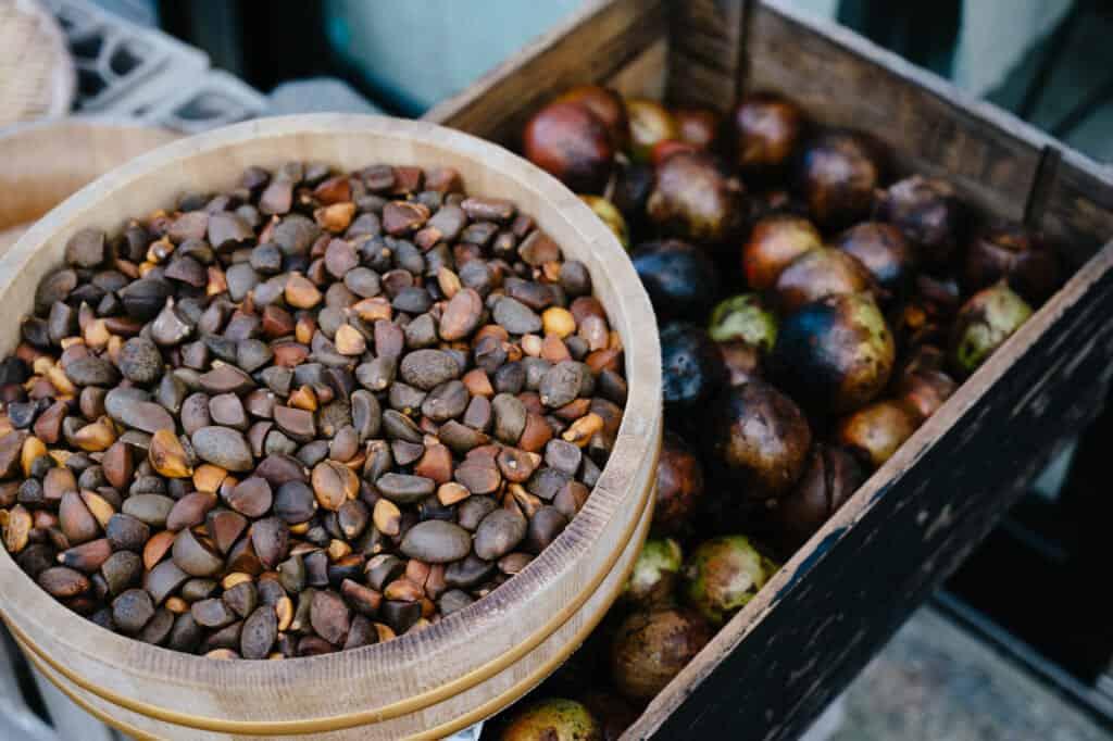 Graines et fruits de tsubaki (camélia)