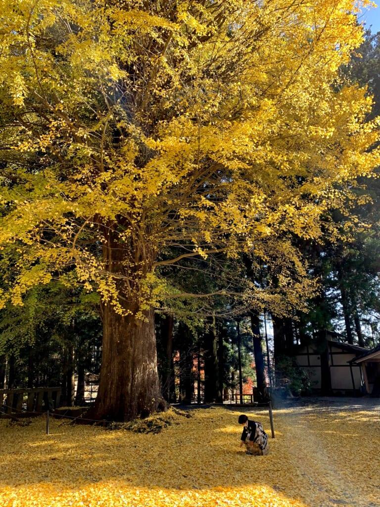 Arbre d'automne et garçon en hakama dans la lumière matinale