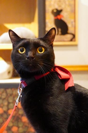 Chat noir avec un collier rouge