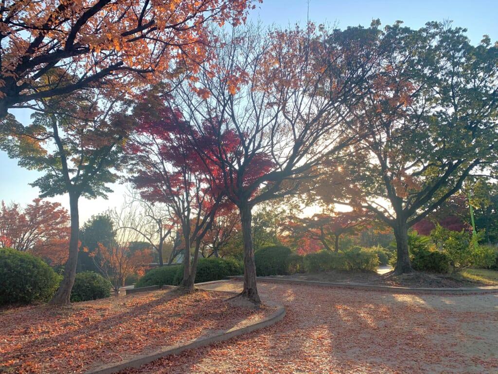 Arbres d'automne dans la lumière matinale-1