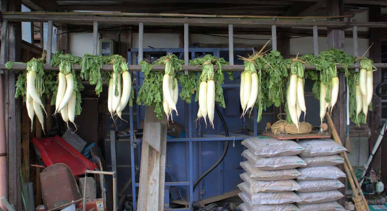 Daikon, radis blancs, séchant dans une ferme japonaise de Sado