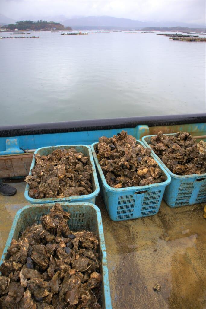 Cageot d'huîtres Akitsu-Maru