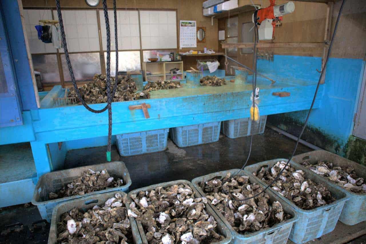 Cageots d'huîtres japonaises à Sado