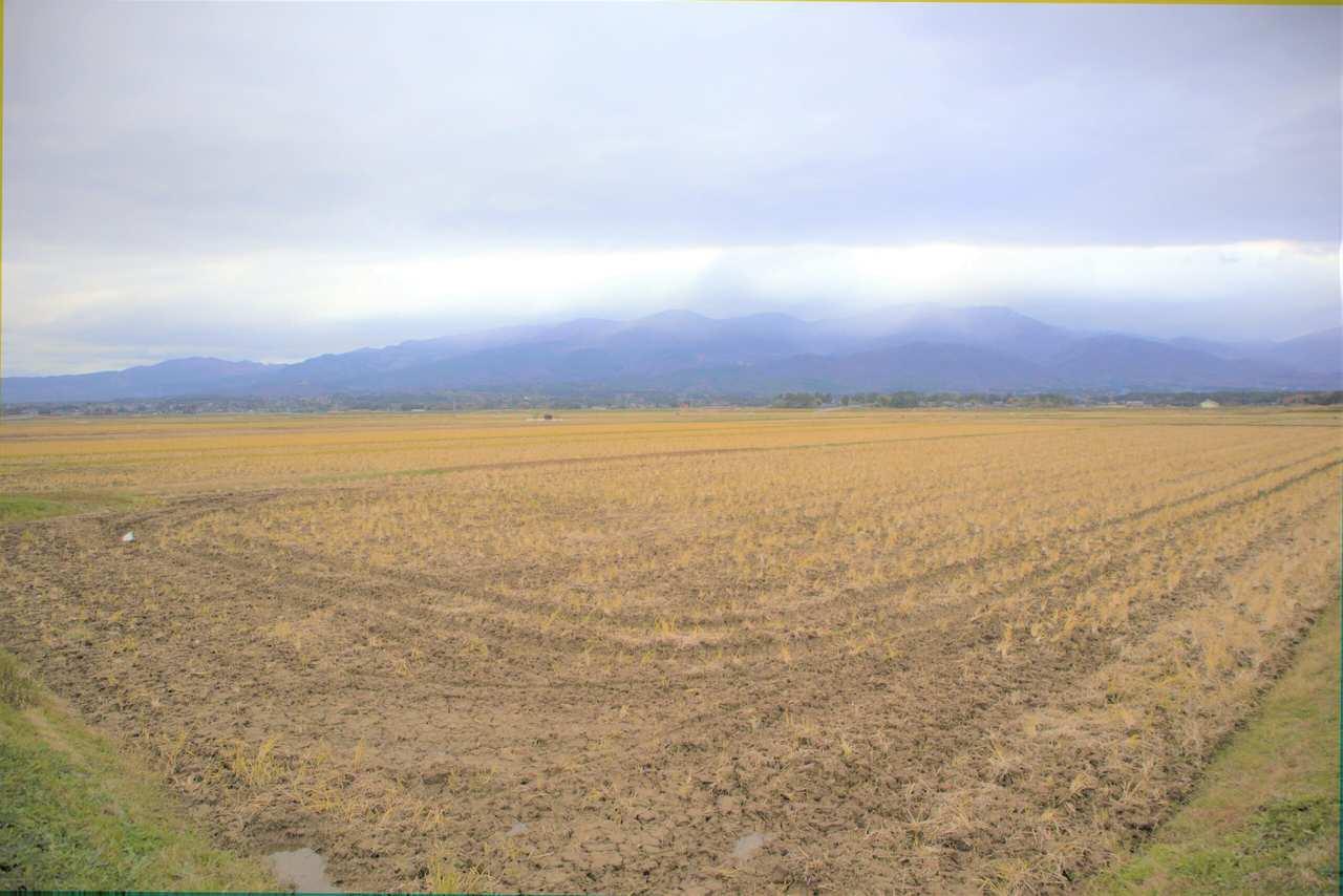 une rizière sur l'île de Sado