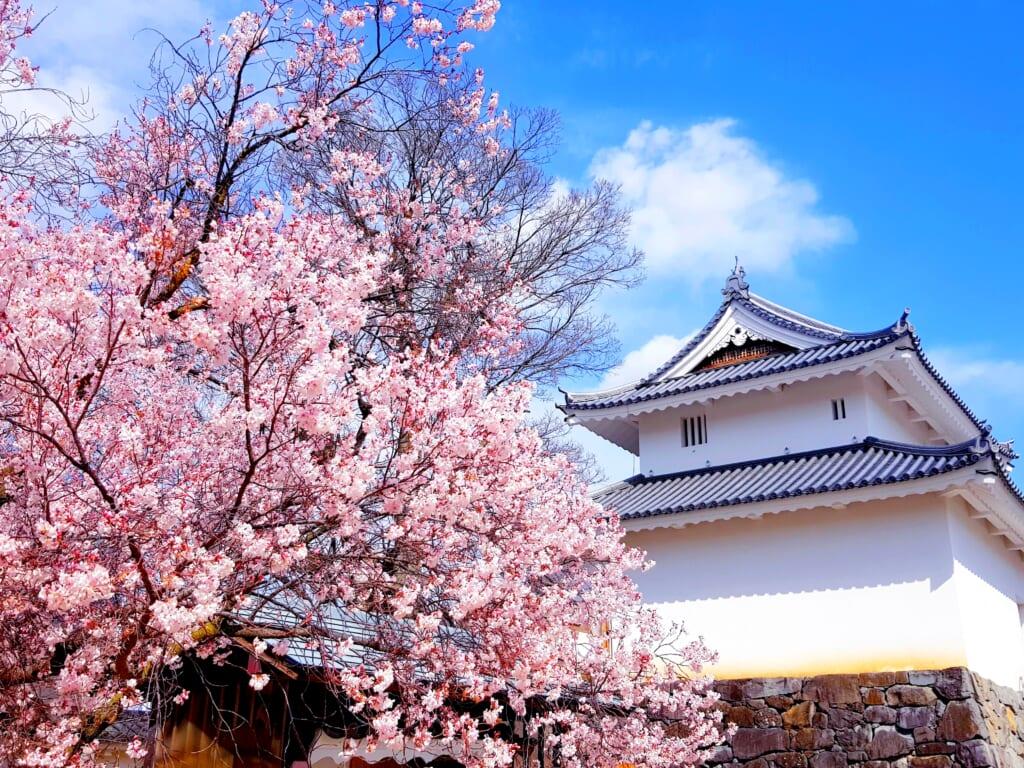 Le Château de Kofu bordé de sakuras