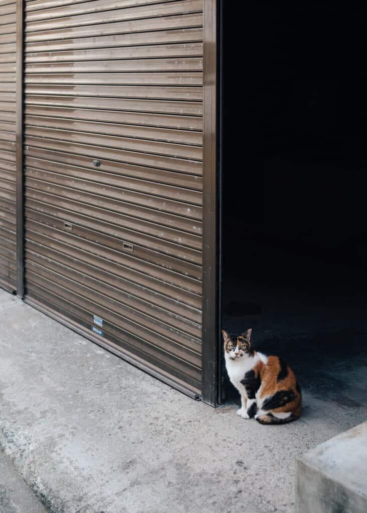 un chat dans une rue d'Enoshima