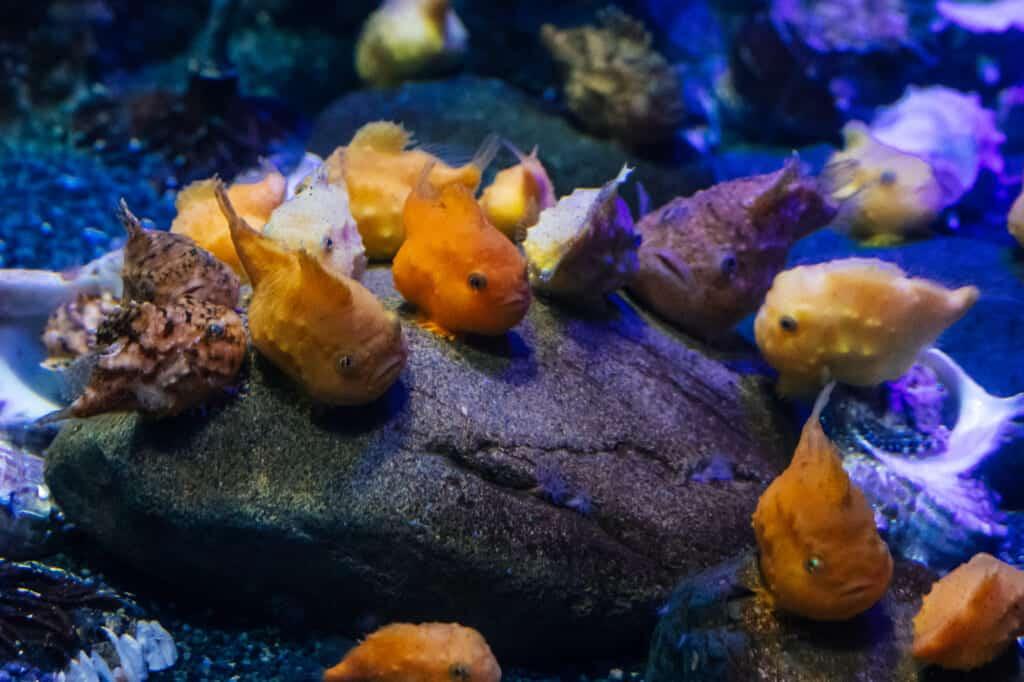 de petits poissons étranges de l'aquarium d'enoshima