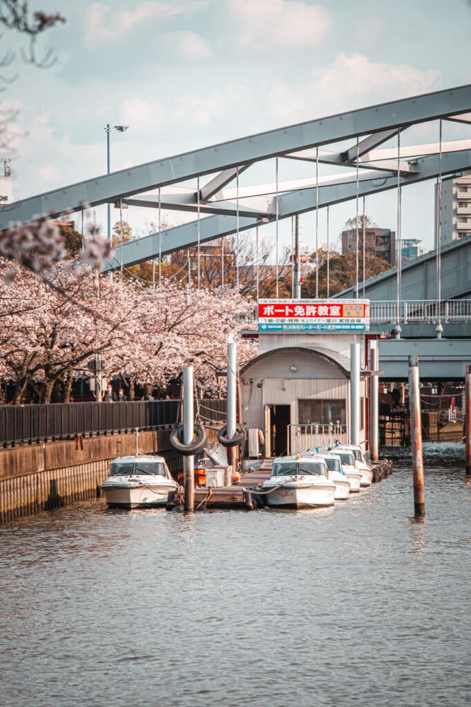 Bus flottants proposant des excursions pour admirer les sakura