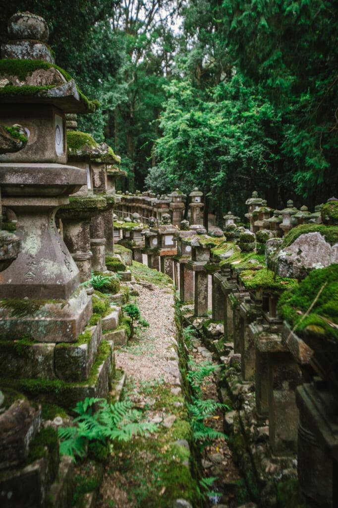 Les fameuses lanternes du Kasuga Taisha