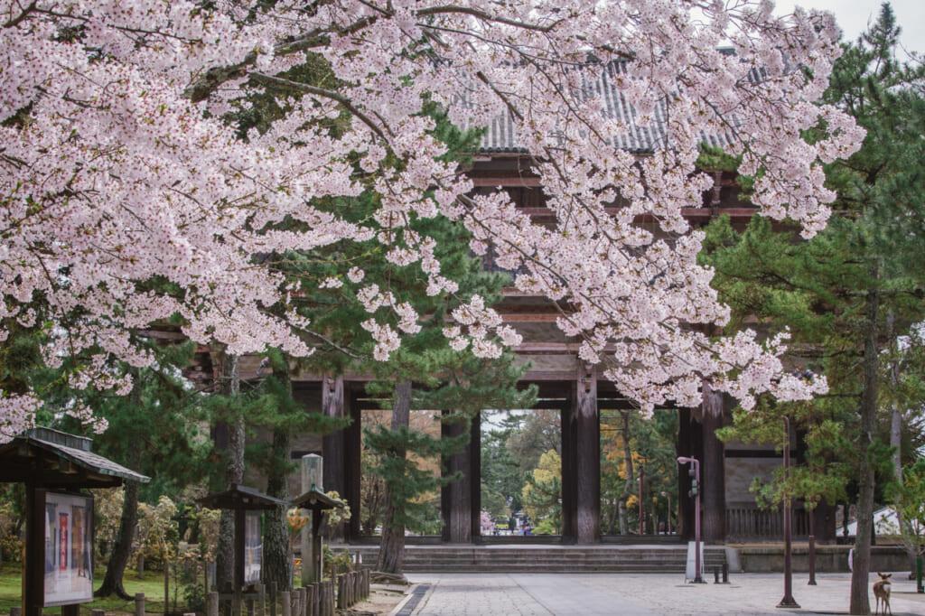 Ciel de sakura à Nara