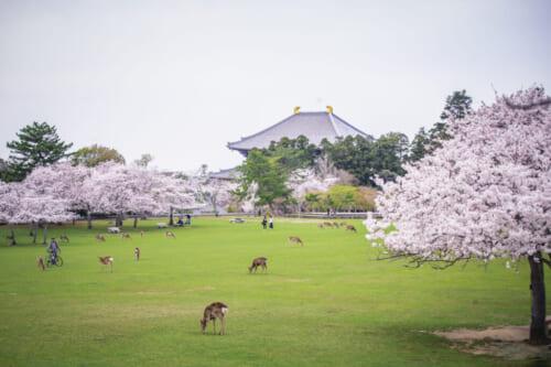 Kasugano-enchi au printemps