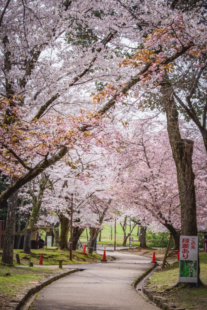 Ciel de sakura à Chayama-enchi