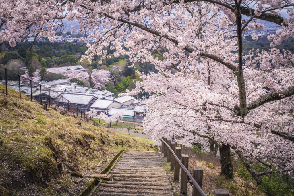 Au Mont Wakakusa, le jeu en vaut la chandelle