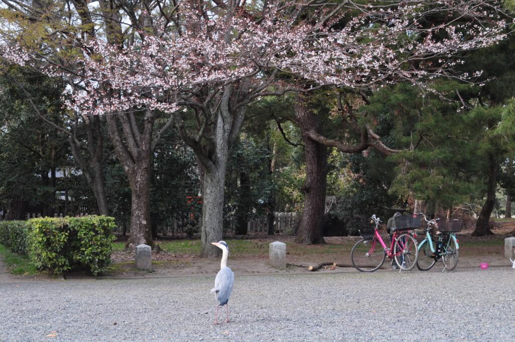 Lorsque la faune et la flore se rencontrent au jardin impérial de Kyoto