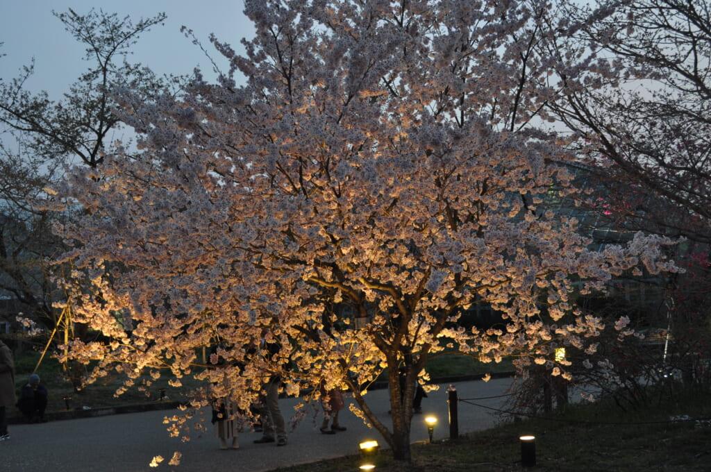 light up au jardin botanique de Kyoto