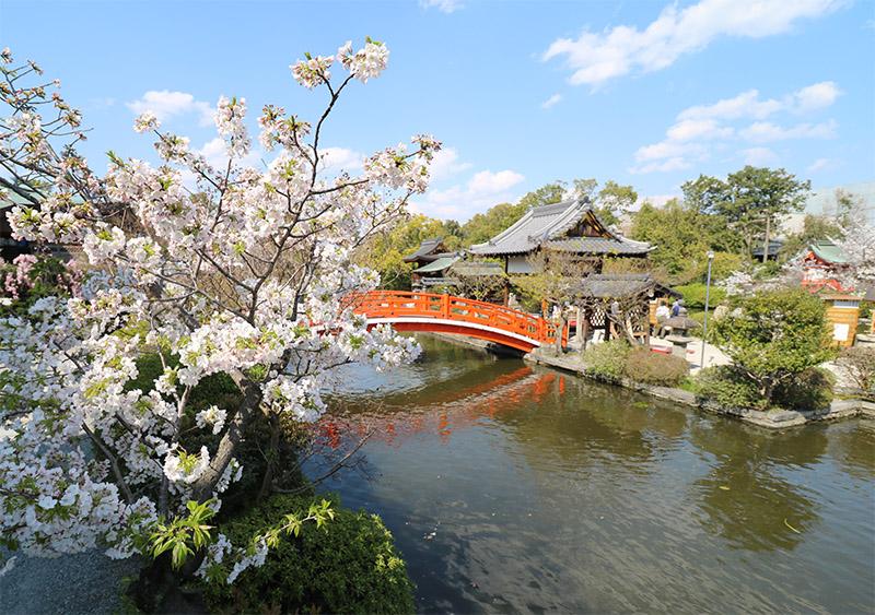 Le Shinsen-en au printemps, un paysage digne de carte postale