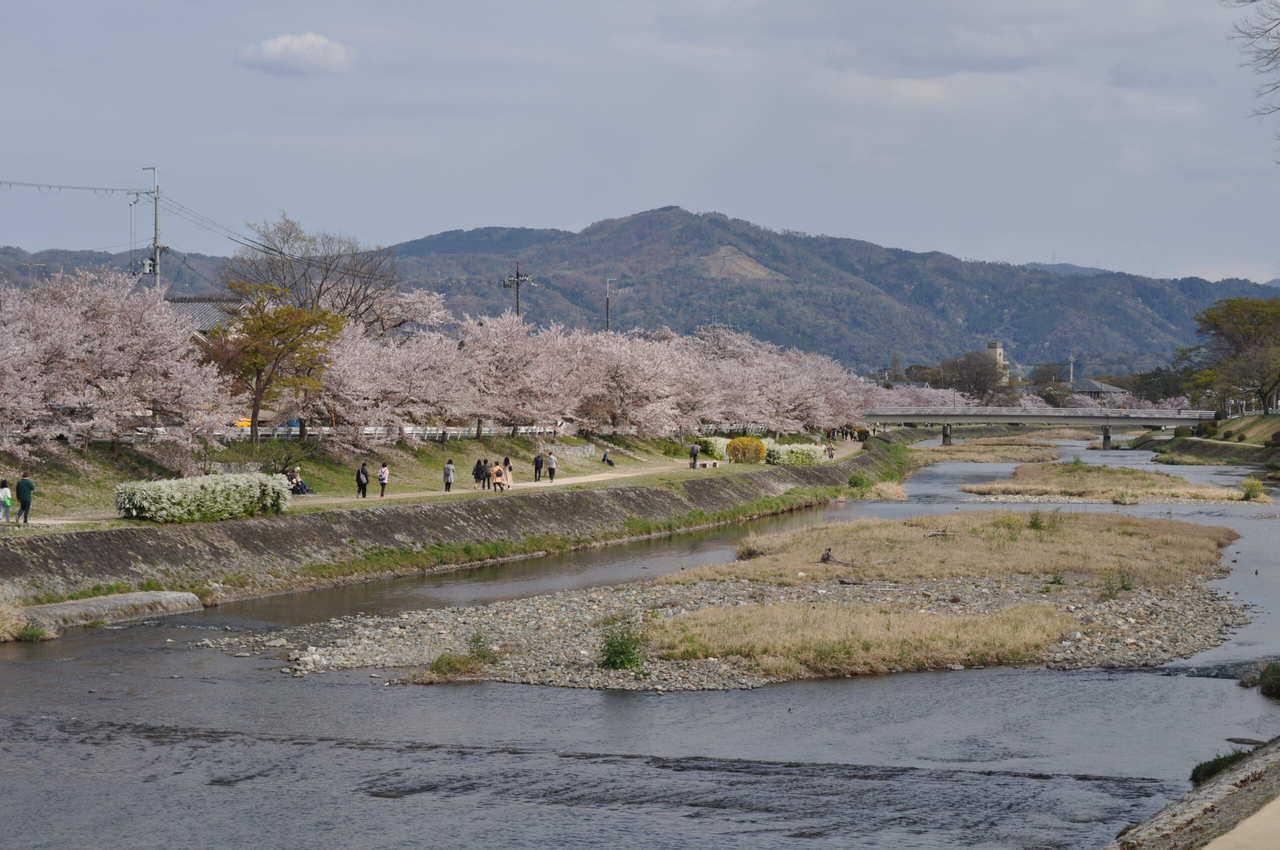 Les recoins secrets de Kyoto pour profiter des sakura
