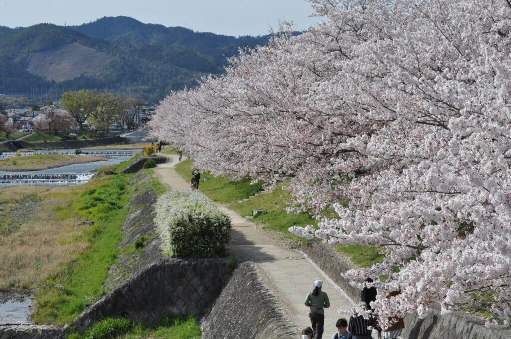 Promenade, footing, bronzette...Les kyotoïtes ne sont jamais bien loin de la rivière Kamo