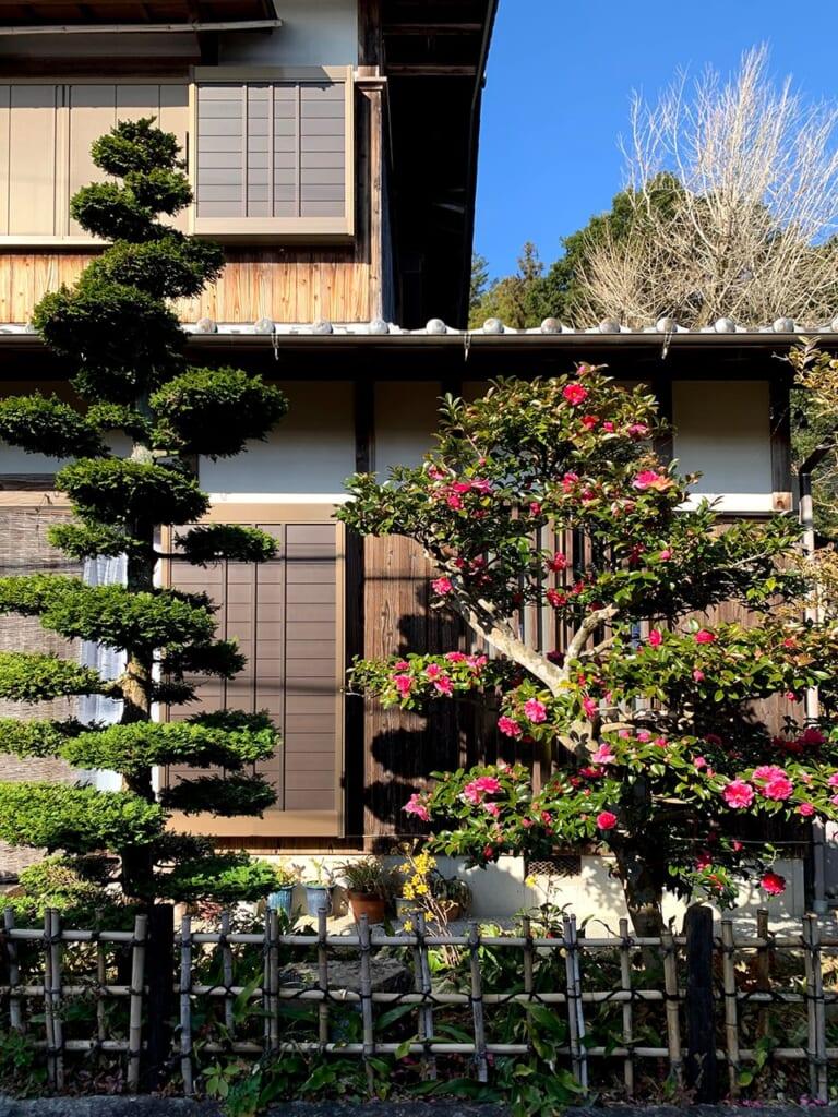 Arbres taillés avec soin devant une maison traditionnelle japonaise