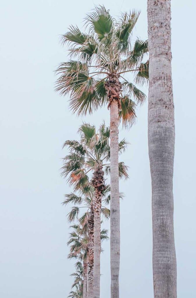 Palmier à SENNAN LONG PARK