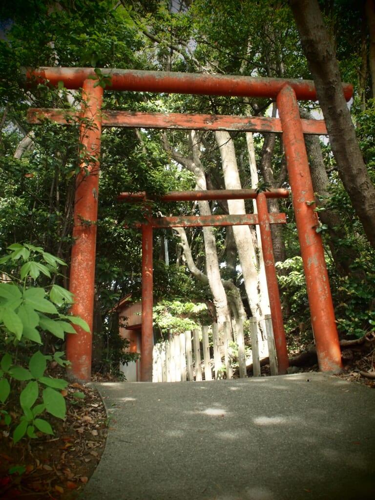 torii vermillon au milieu des arbres, dans un sanctuaire shinto japonais