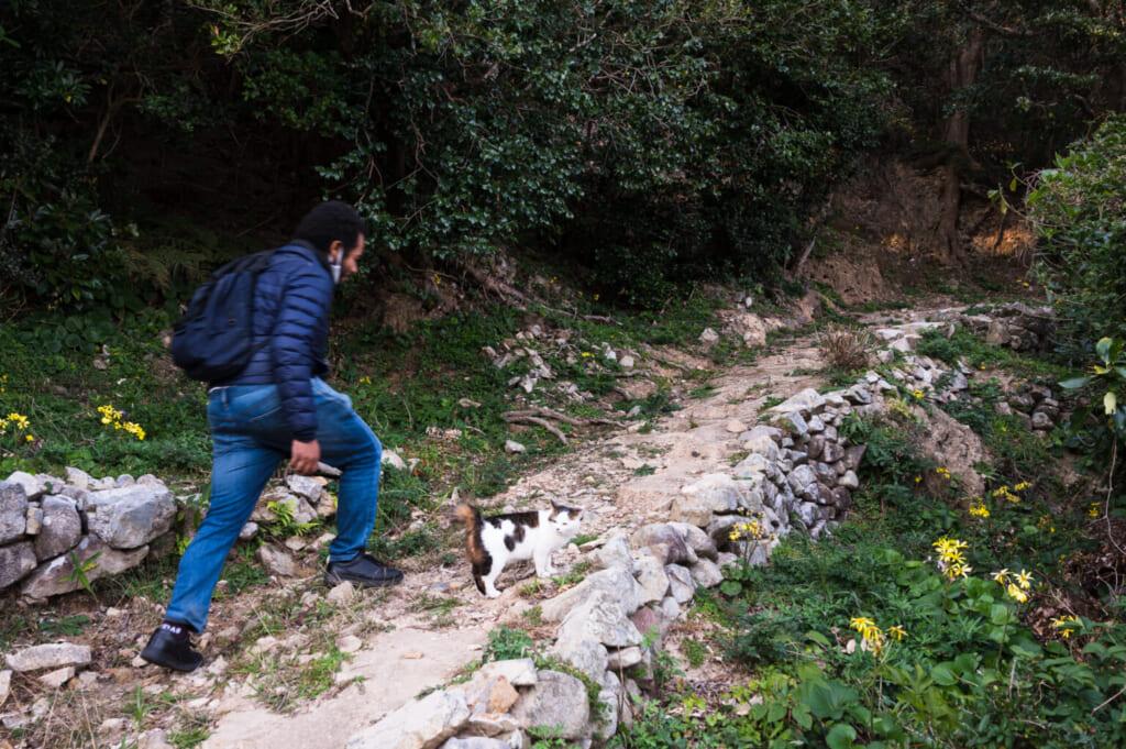 Un chat guide un homme sur un sentier sur les îles Goto