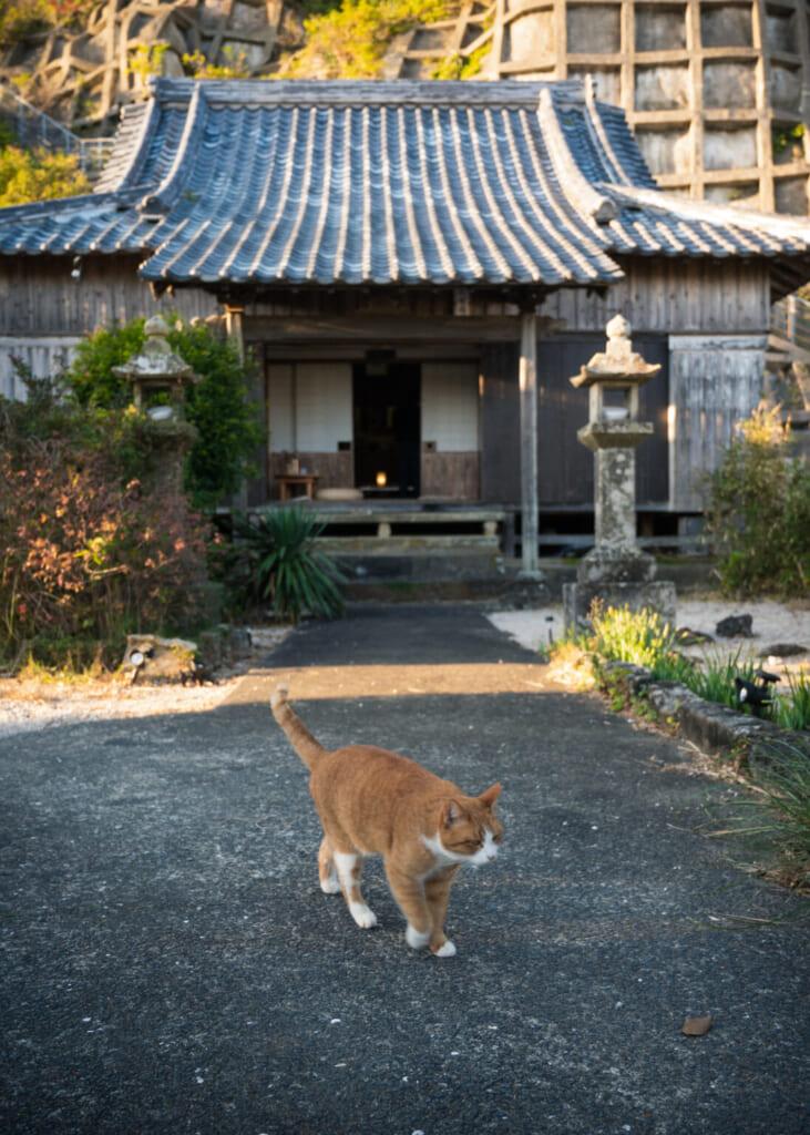 Chat roux et blanc devant un temple japonais