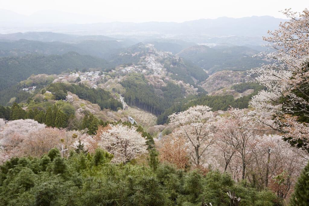 Vue sur le mont Yoshino pendant la floraison des cerisiers