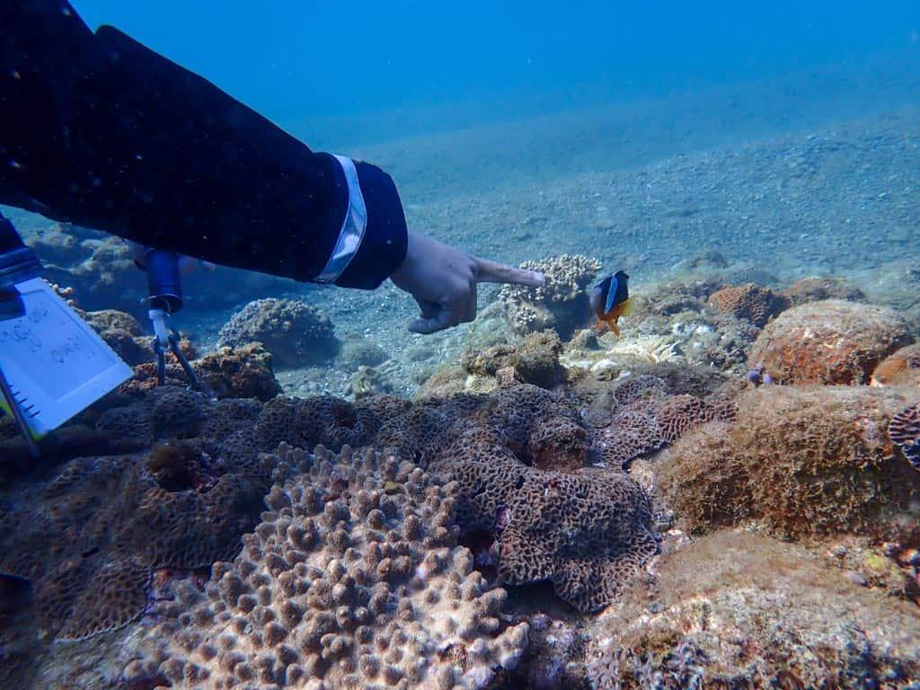 étudier les poissons tout en faisant de la plongée au Japon