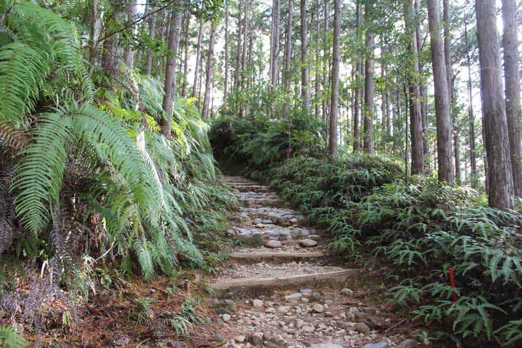 Marches le long d'un des chemins de pèlerinage du Kumano Kodo