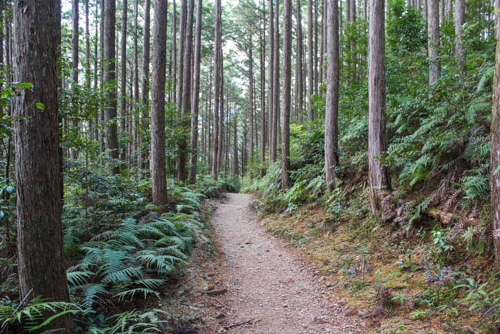 Chemin du Kumano Kodo passant par la forêt