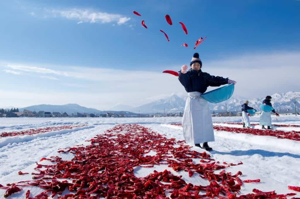 Piments japonais jetés sur la neige