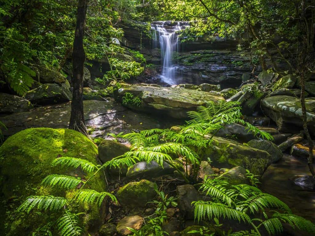 cascade dans une forêt luxuriante d'une île d'Okinawa