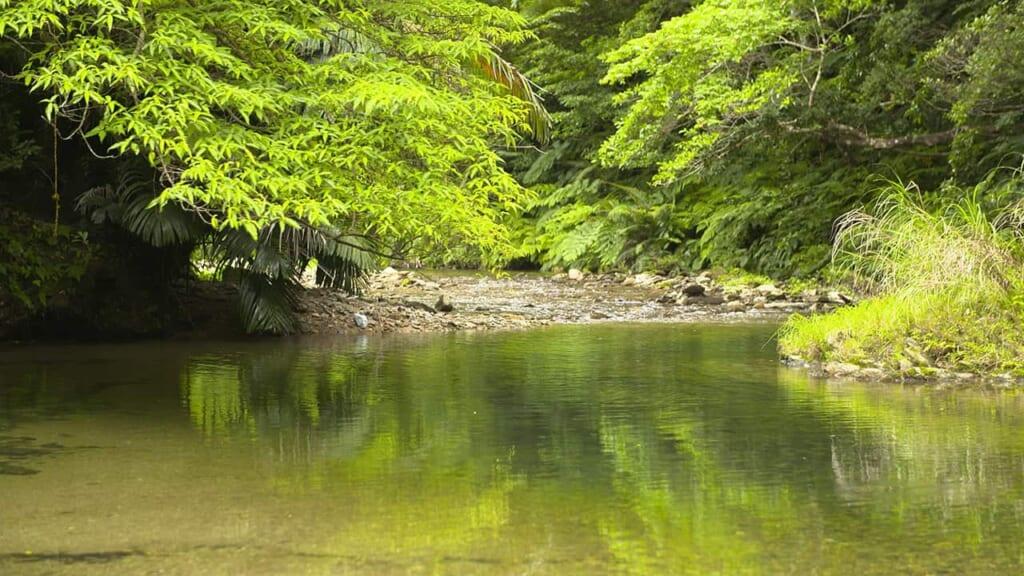 plan d'eau dans le parc yanbaru à okinawa