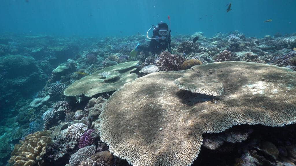 Comment voyager responsable pour contribuer au développement durable des îles d'Okinawa