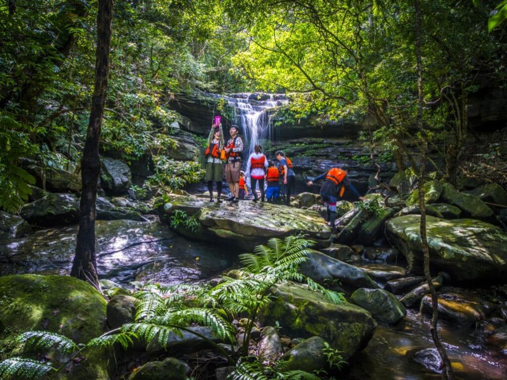 Randonnée accessible en forêt