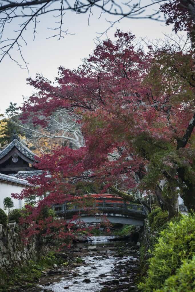 momiji au dessus d'un pont dans un temple japonais