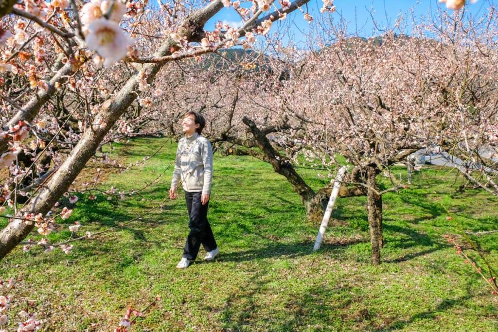 Balade dans les abricotiers