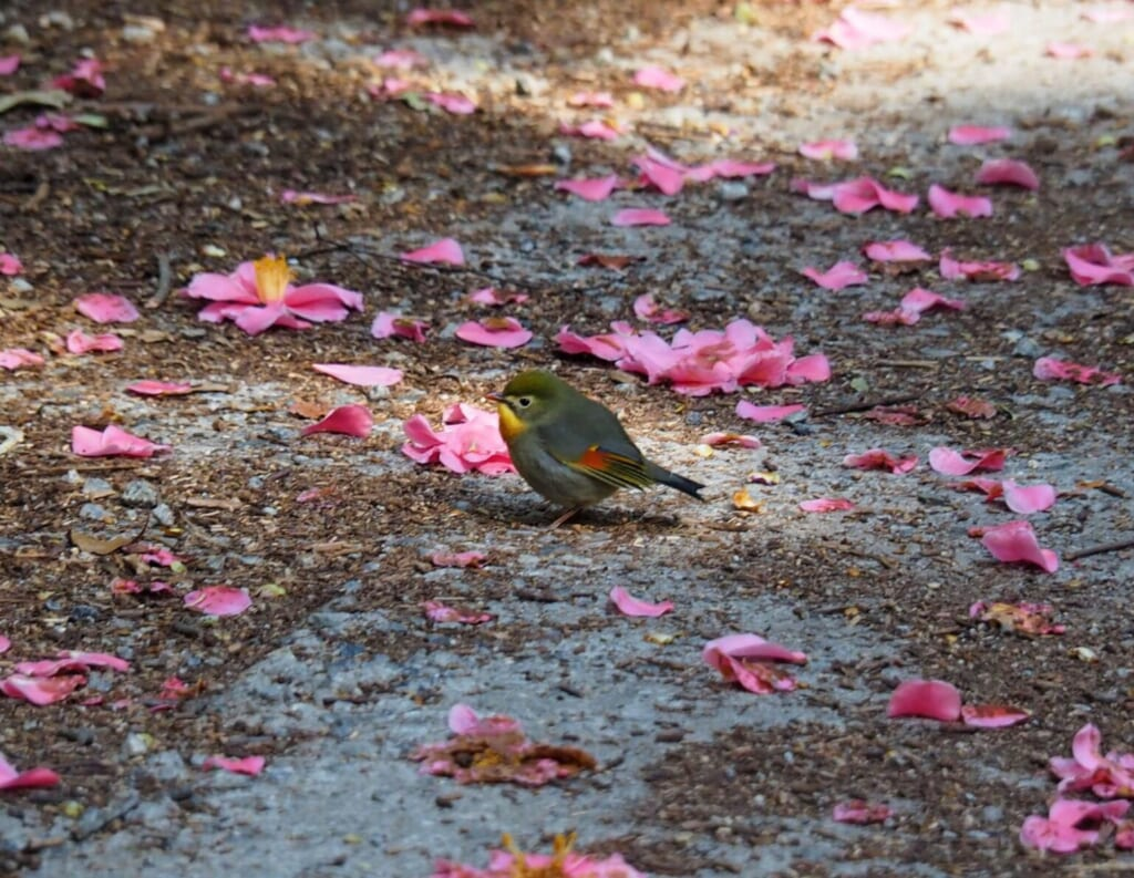 un nouvel ami le long du chemin de randonnée Sekibutsu Junrei