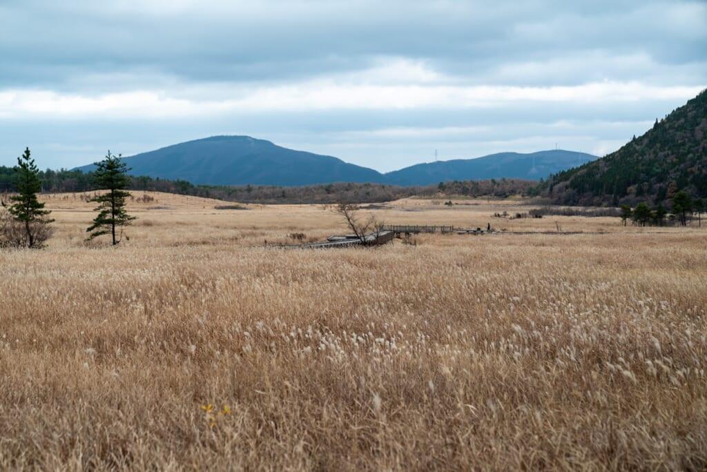 Champs d'herbe recouvrant les marais de Tadewara