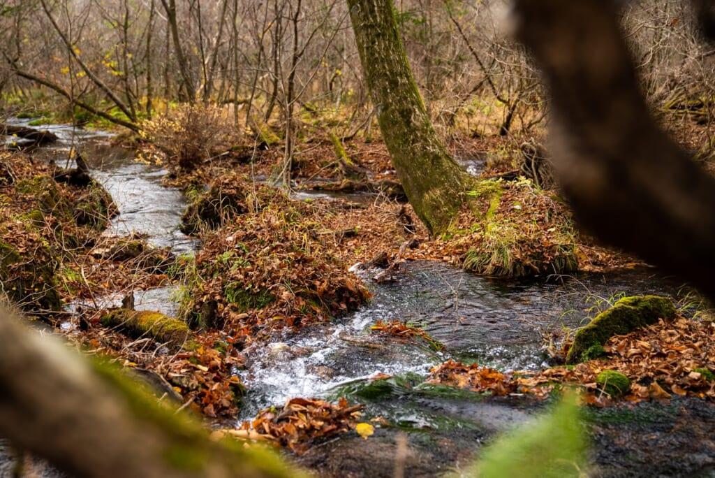 Eau de source filtrée par les marais de la préfecture d'Oita