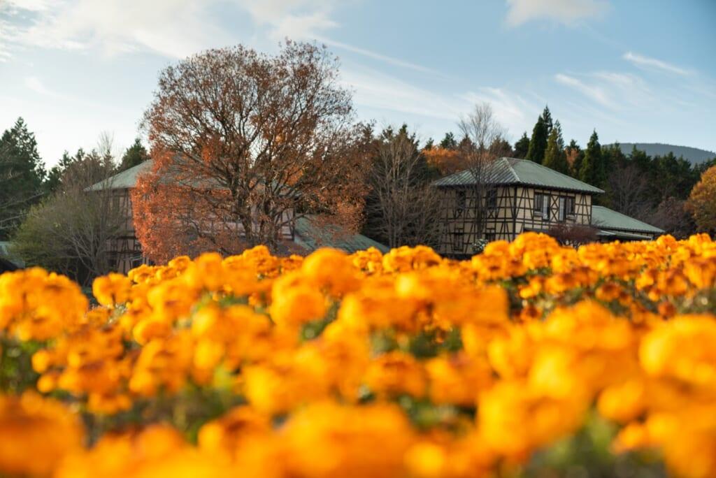 un champ de fleur jaunes à Kyushu
