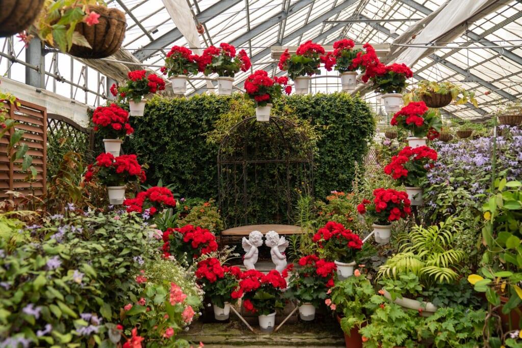 fleurs à l'intérieur de la serre du parc aux fleurs d'oita