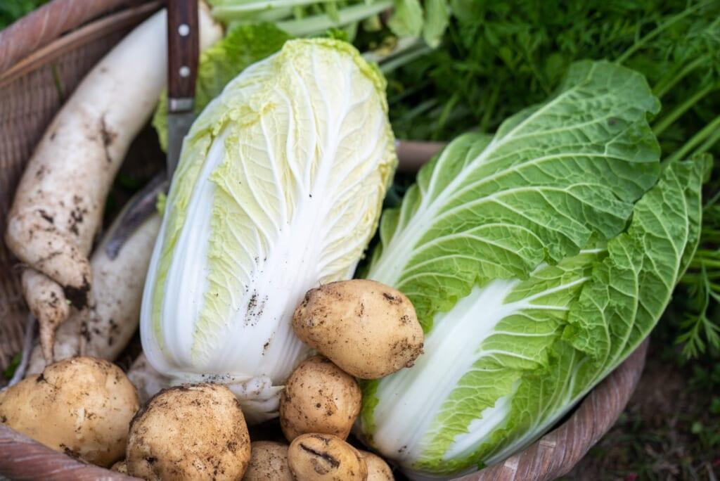 légumes récoltés pour le dîner lors d'un sjour à la ferme au japon