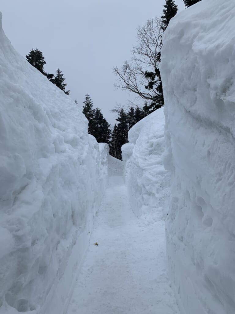 chemin de randonnée entre des murs de neige