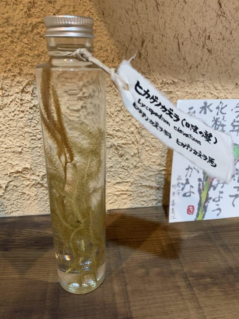 herbe médicinale sauvage dans un café à Hida
