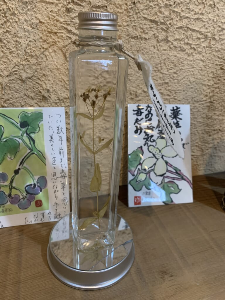 plante médicinale de la satoyama de Gifu